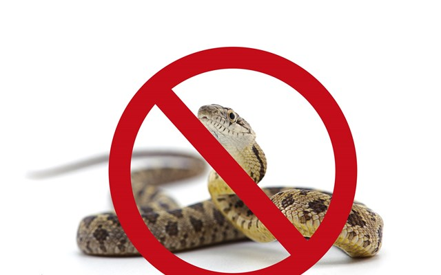 11. It's illegal to own a pet snake, turtle or lizard